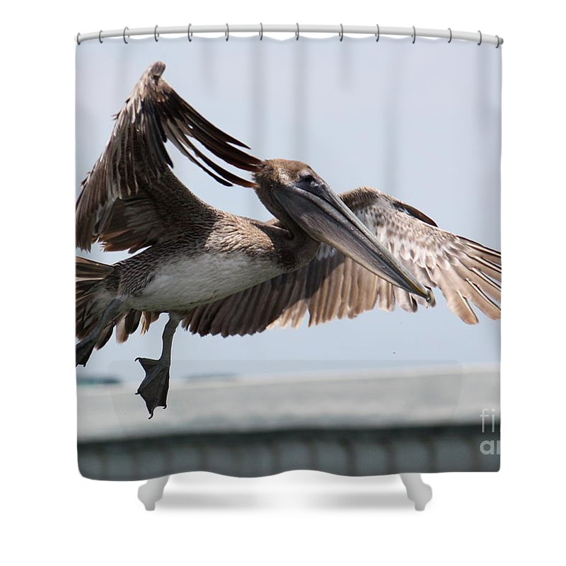 Pelican Shower Curtain featuring the photograph Brown Pelican Landing by Carol Groenen