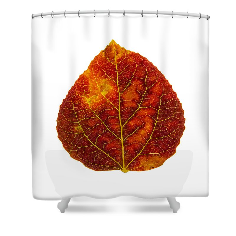 Aspen Leaf Shower Curtain featuring the digital art Brown Red And Yellow Aspen Leaf 1 by Agustin Goba