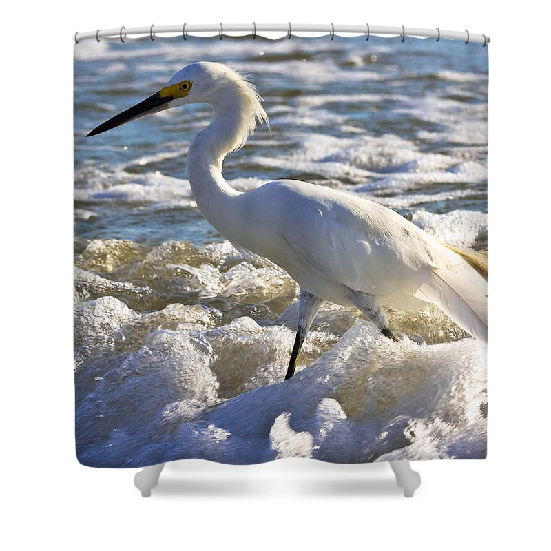 Beach Shower Curtain featuring the photograph Bubbles Around Snowy Egret by Ed Gleichman