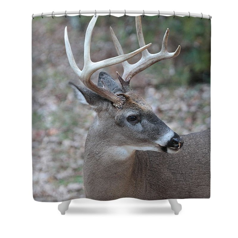 Buck Shower Curtain Featuring The Photograph Side View By Dwight Cook