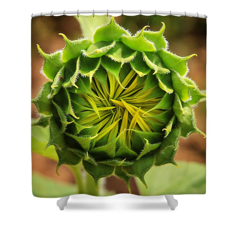 Sunflower Shower Curtain featuring the photograph Budding Sunflower by Sharon Horn