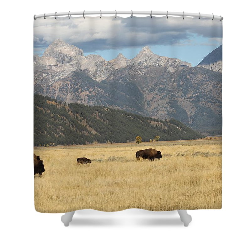 Buffalos Shower Curtain featuring the photograph Buffalo In The Tetons by G Berry