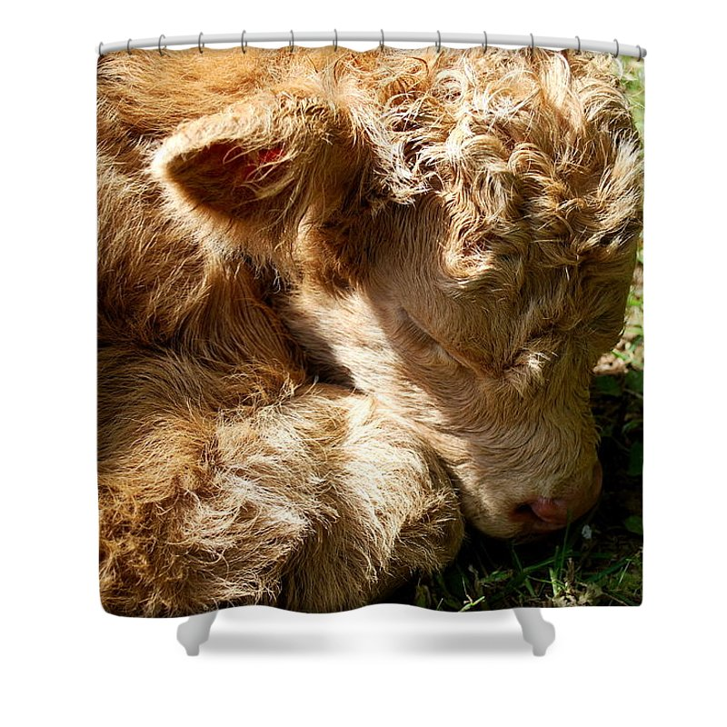 Cow Shower Curtain featuring the photograph Buffie by Kathy Sampson