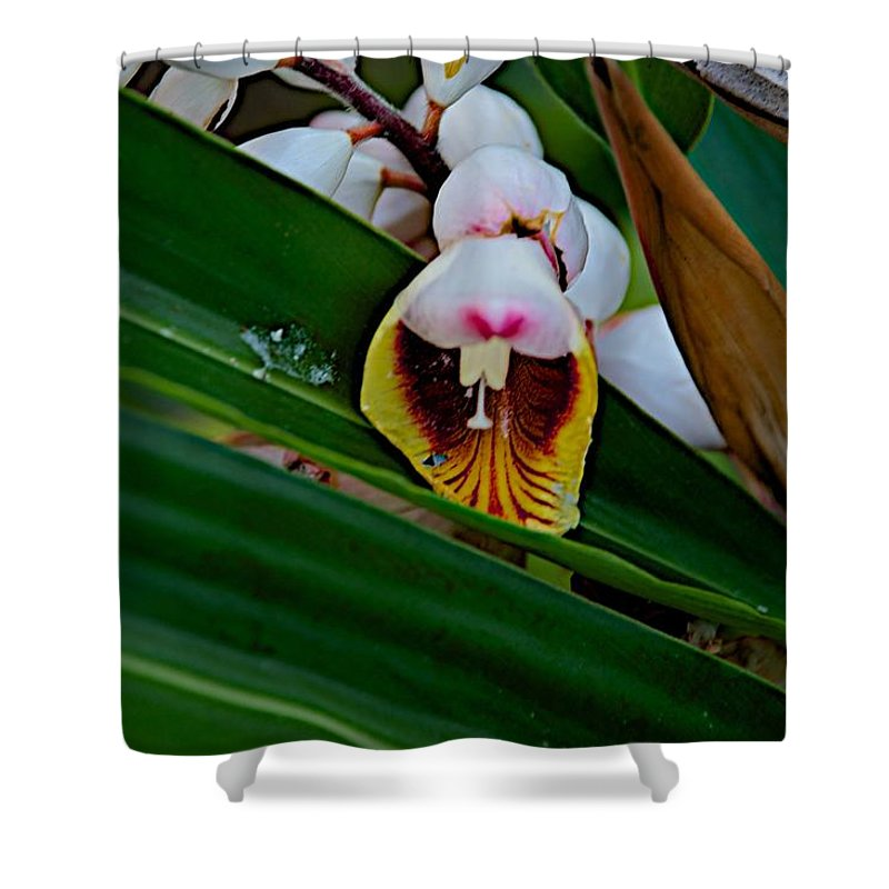 Blossom Shower Curtain featuring the photograph Bug by Joseph Yarbrough