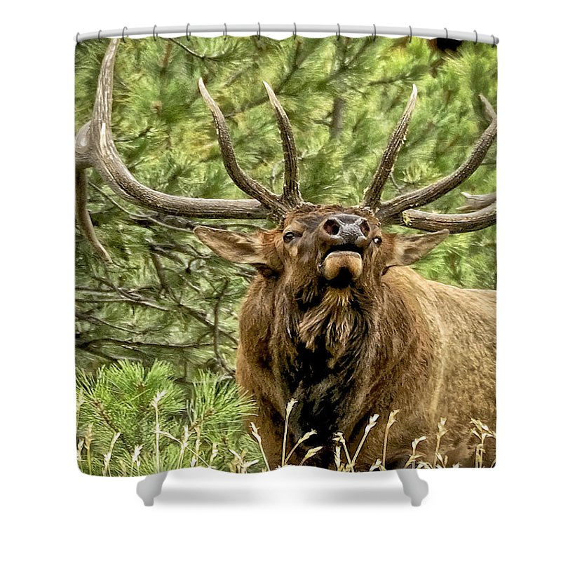 Bull Elk Shower Curtain Featuring The Photograph Bugling II By Ron White