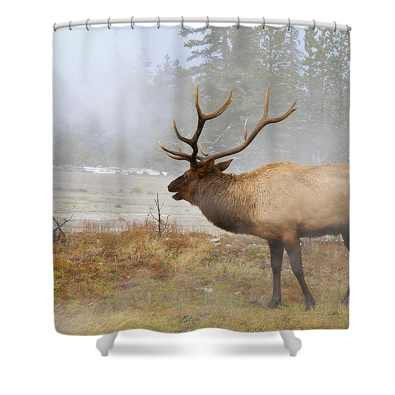 National Park Shower Curtain featuring the photograph Bull Elk Bugles Loves In The Air by Ed Riche