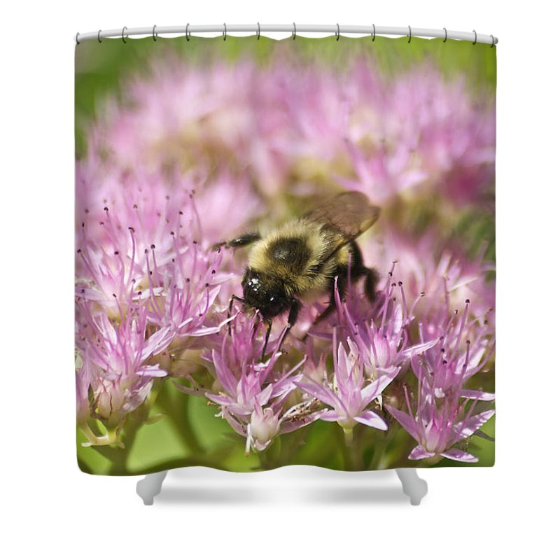 Bee Shower Curtain featuring the photograph Bumble Bee On A Century Plant by Michael Peychich