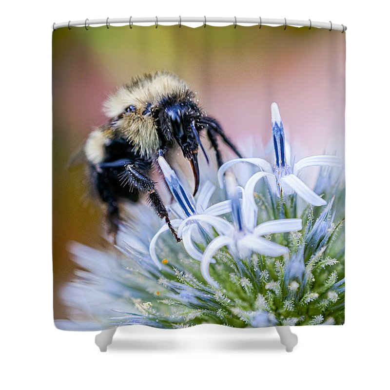 Thistle Shower Curtain featuring the photograph Bumblebee On Thistle Blossom by Marty Saccone