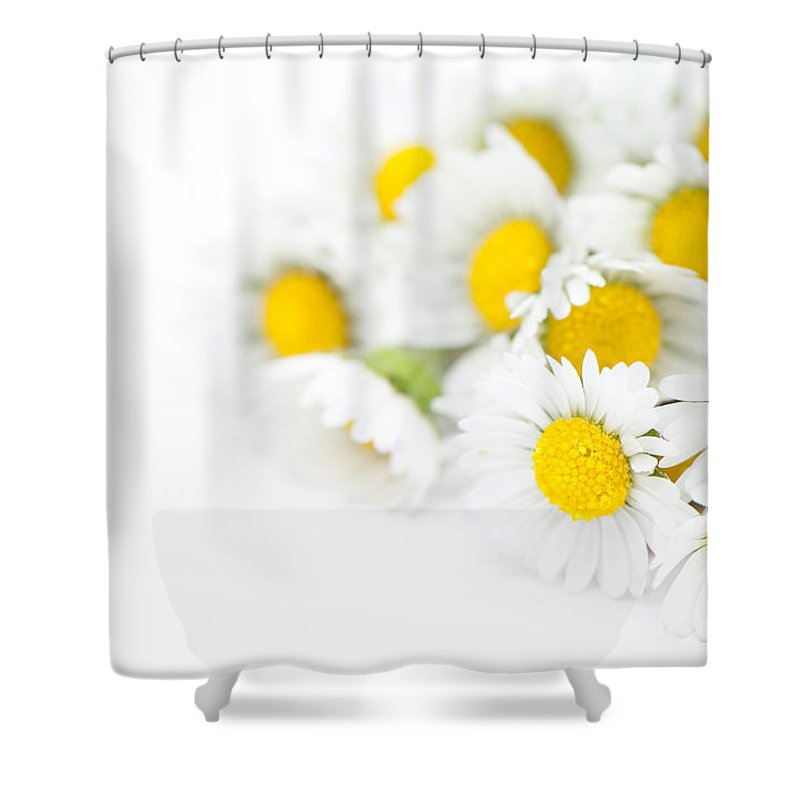 Floral Shower Curtain featuring the photograph Bunch Of Daisies by Anne Gilbert