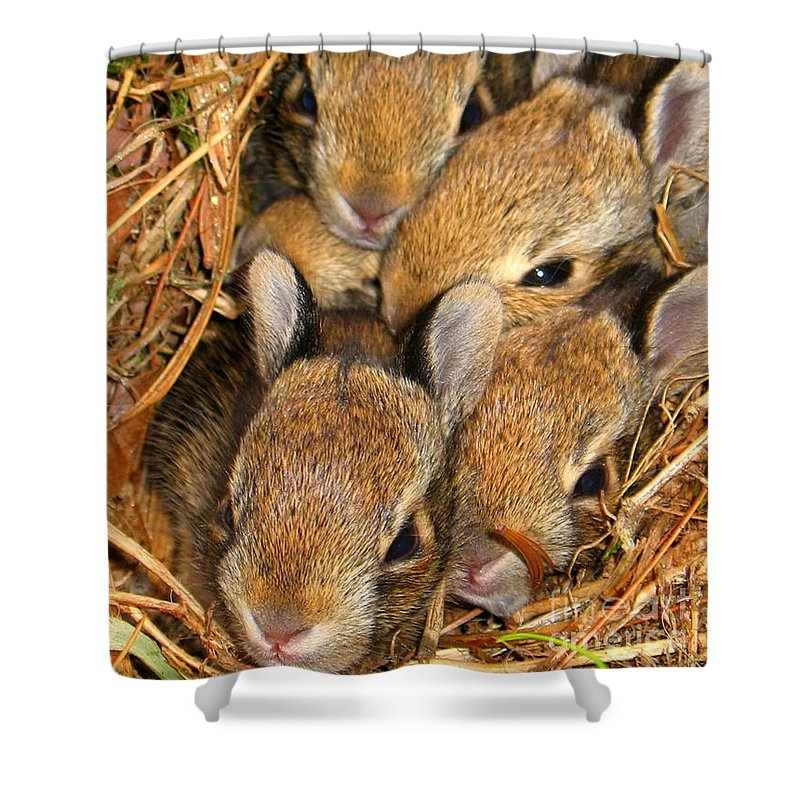 Bunny Babies Shower Curtain featuring the photograph Bunny Babies by Patti Whitten