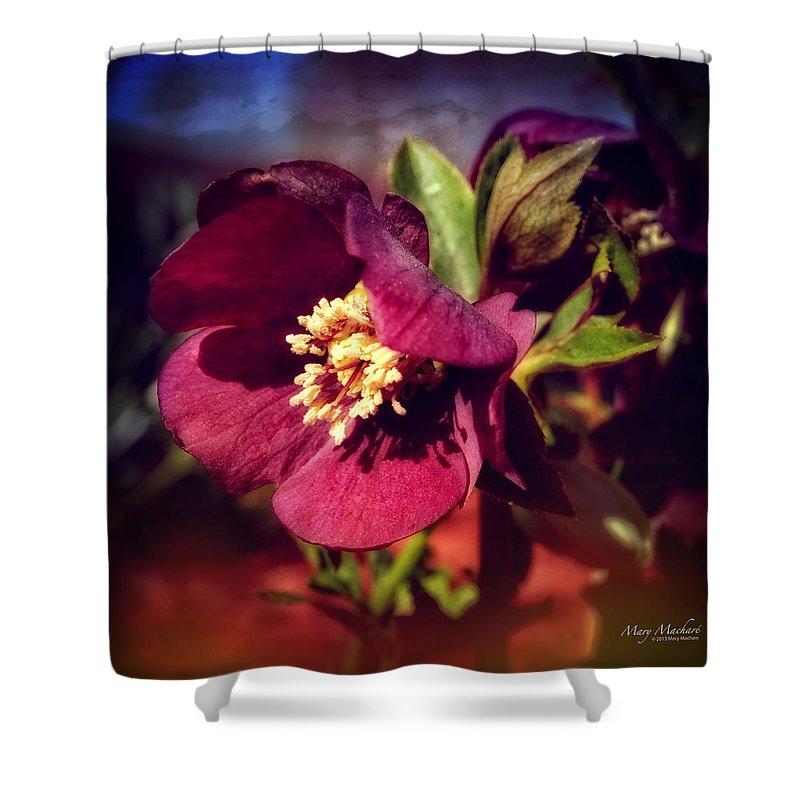 Burgundy Hellebore Flower Shower Curtain featuring the photograph Burgundy Hellebore Flower by Mary Machare