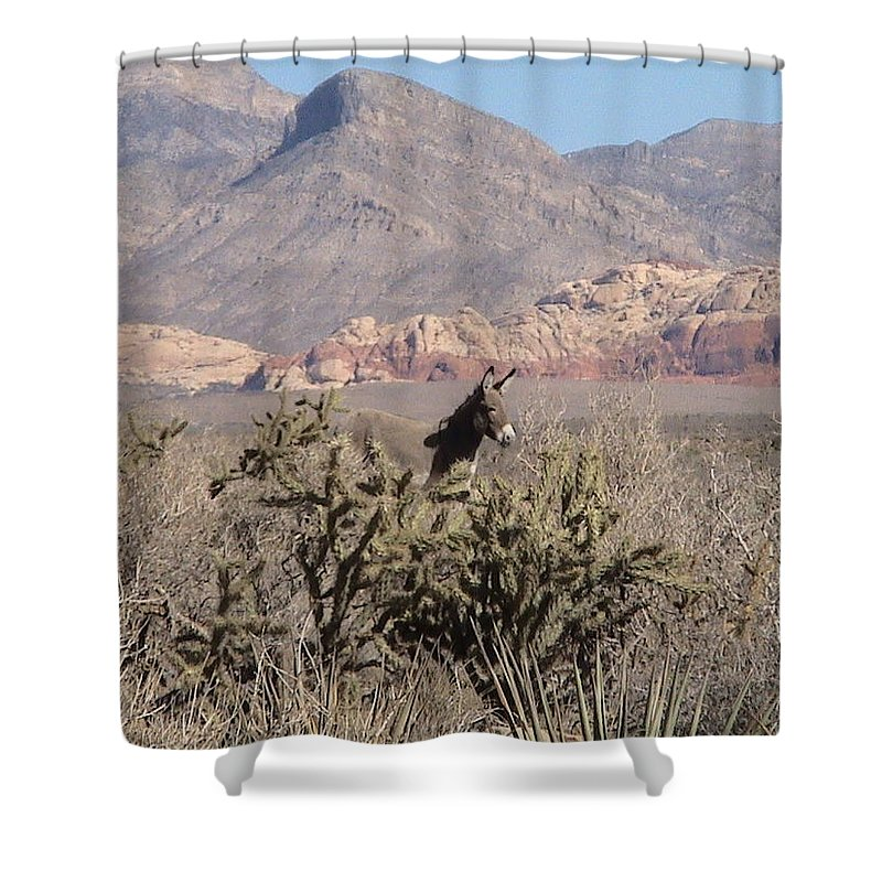 Desert Shower Curtain featuring the photograph Burro Red Rock by Carl Moore