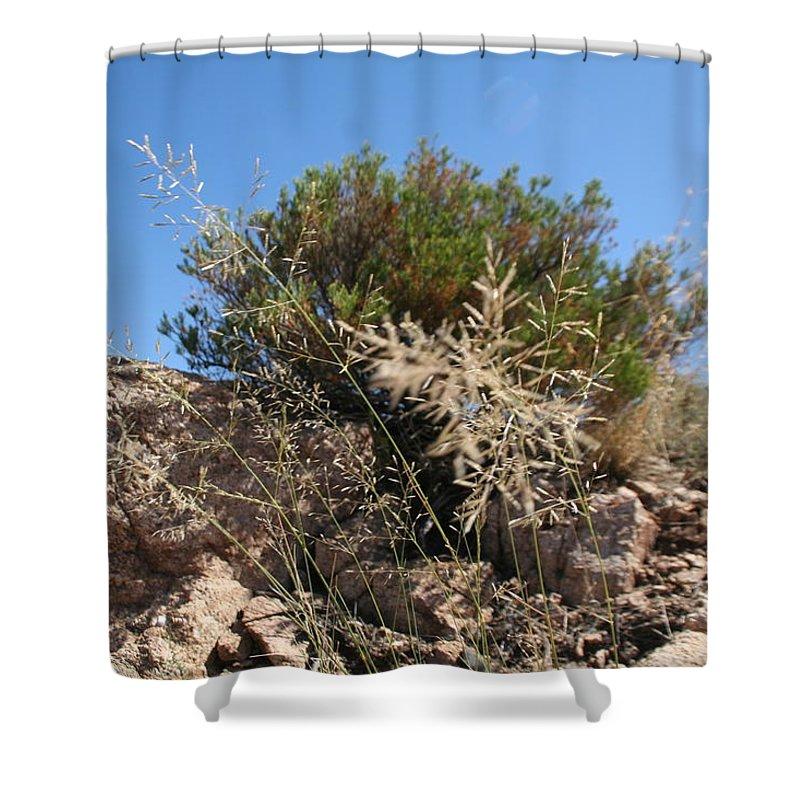 Bush Shower Curtain featuring the photograph Bush by David S Reynolds
