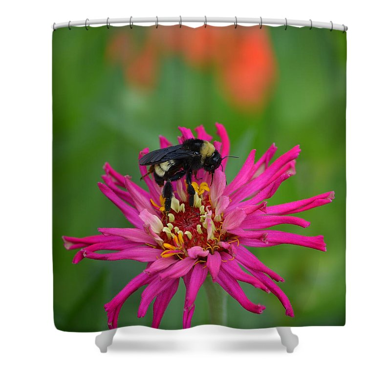 Bee Shower Curtain featuring the photograph Busy Bee by Gale Cochran-Smith