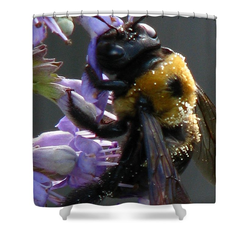Patzer Shower Curtain featuring the photograph Busy Bee by Greg Patzer