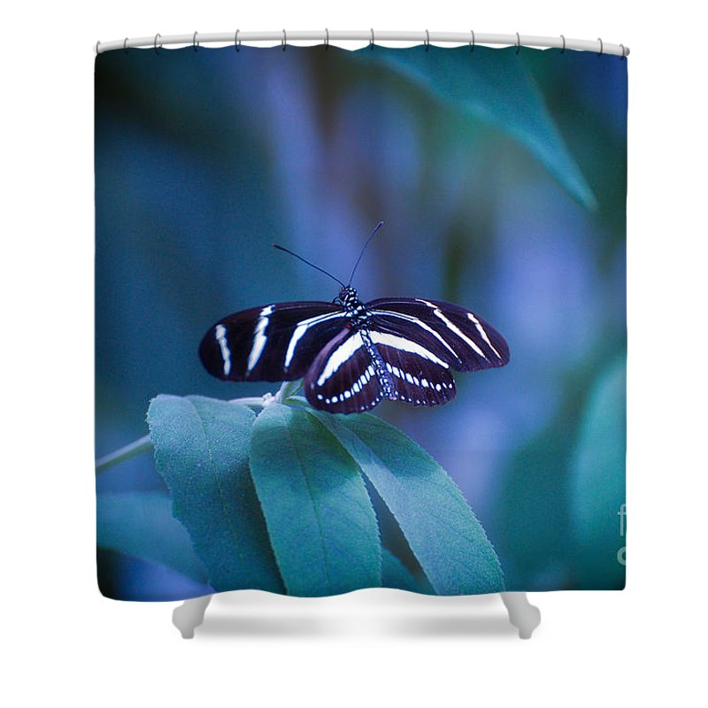Butterfly Shower Curtain featuring the photograph Butterfly 6 by Rich Priest