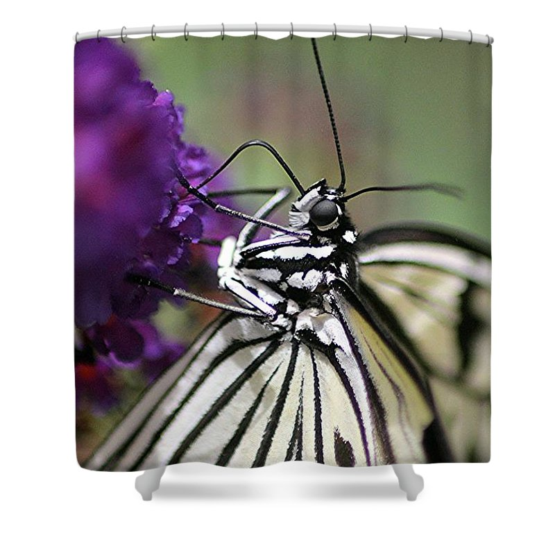 Butterfly Shower Curtain featuring the photograph Butterfly Close Up by Diane Greco-Lesser