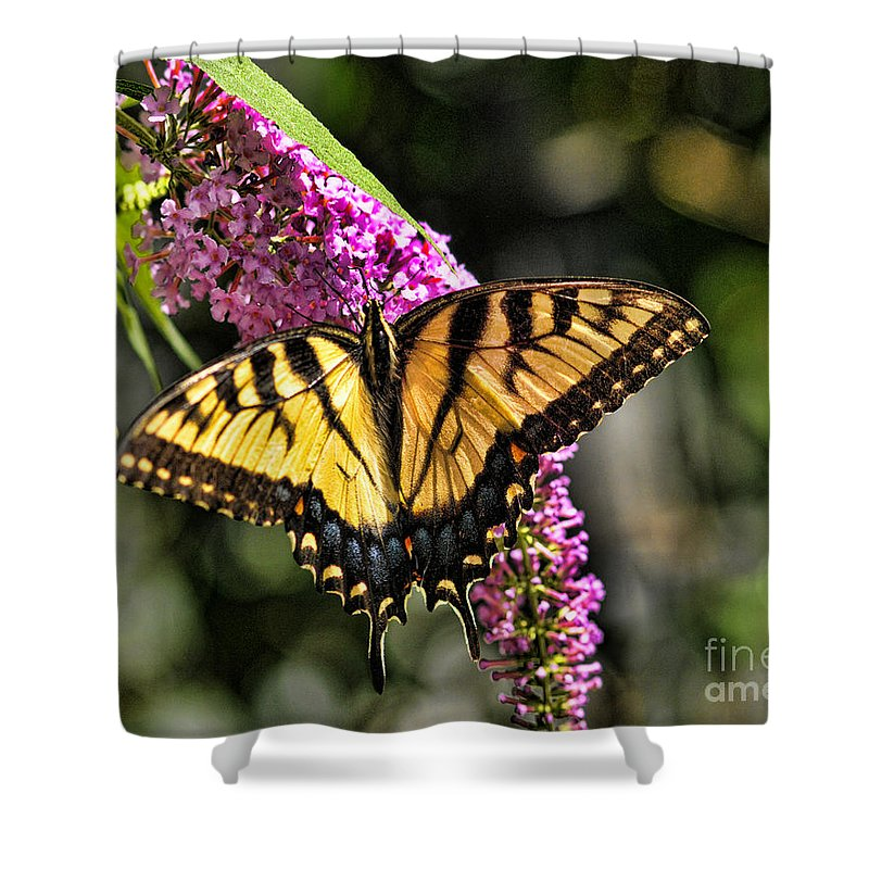 Butterfly Shower Curtain featuring the photograph Butterfly - Eastern Tiger Swallowtail by Paul Ward