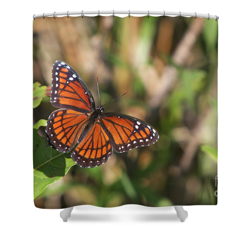 Butterfly Shower Curtain featuring the photograph Butterfly In The Everglades by Christiane Schulze Art And Photography
