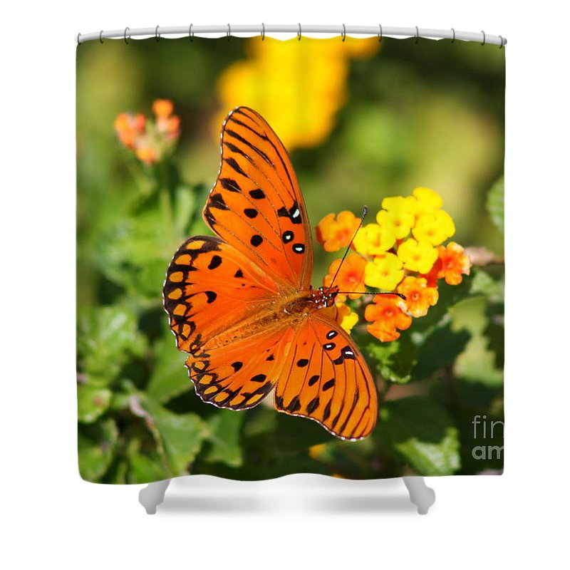 Butterfly Shower Curtain featuring the photograph Butterfly In The Glades - Gulf Fritillary by Christiane Schulze Art And Photography