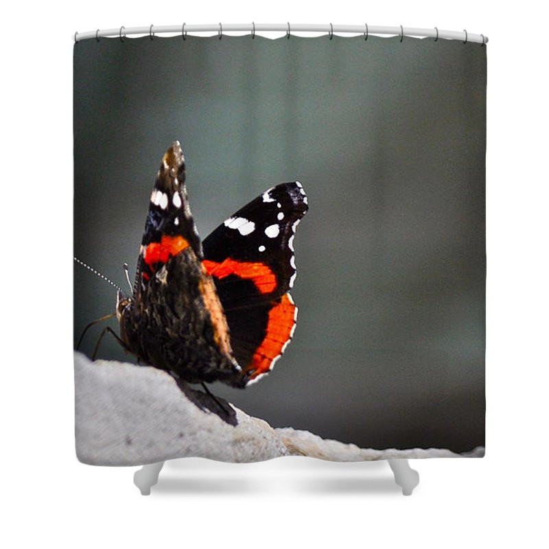 Butterfly Photograph Shower Curtain featuring the photograph Butterfly Landing by Kristina Deane