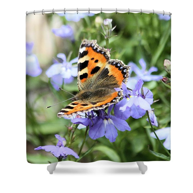 Butterfly Shower Curtain featuring the photograph Butterfly On Blue Flower by Gordon Auld