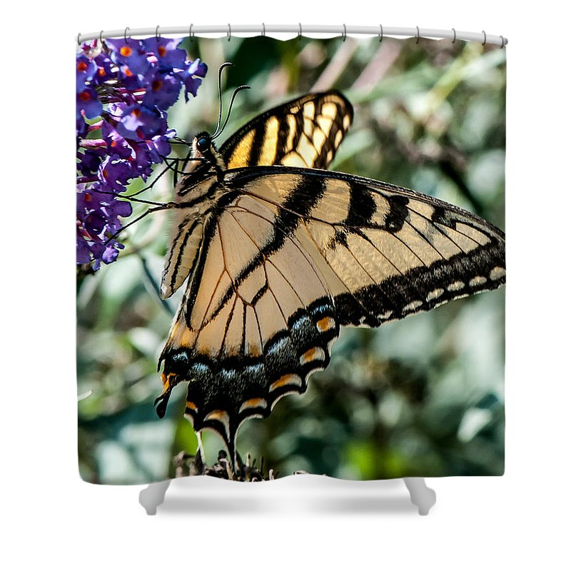 Butterfly Shower Curtain featuring the photograph Butterfly by Sharon Meyer