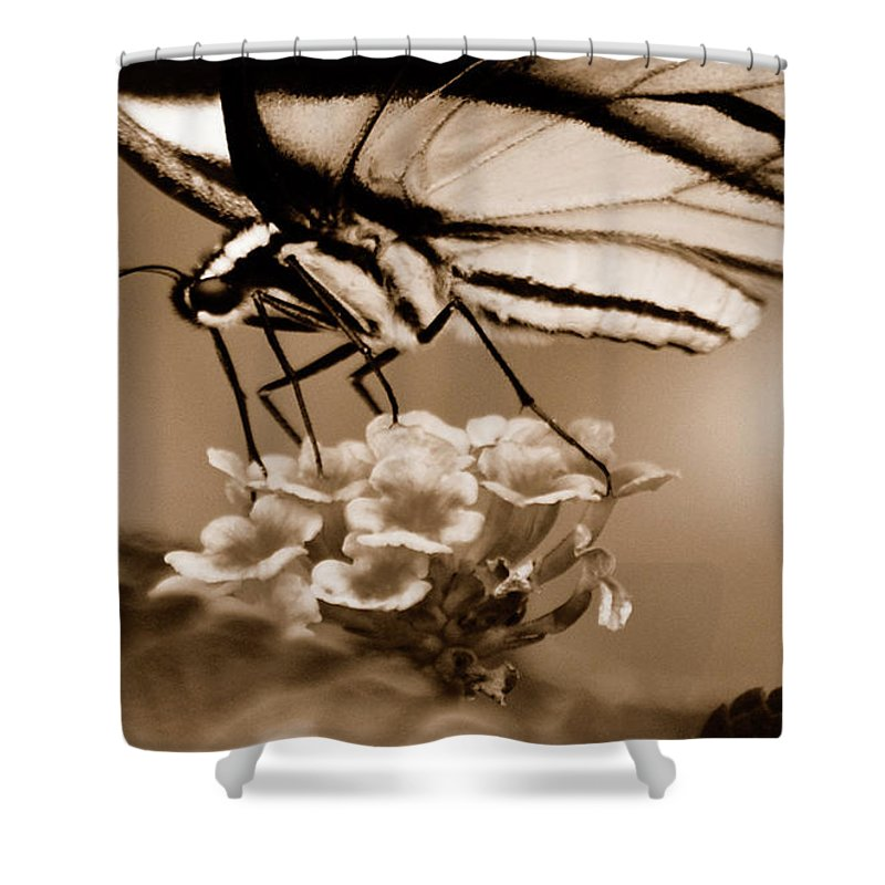Butterfly Shower Curtain featuring the photograph Butterfly Whisper by Lori Tambakis