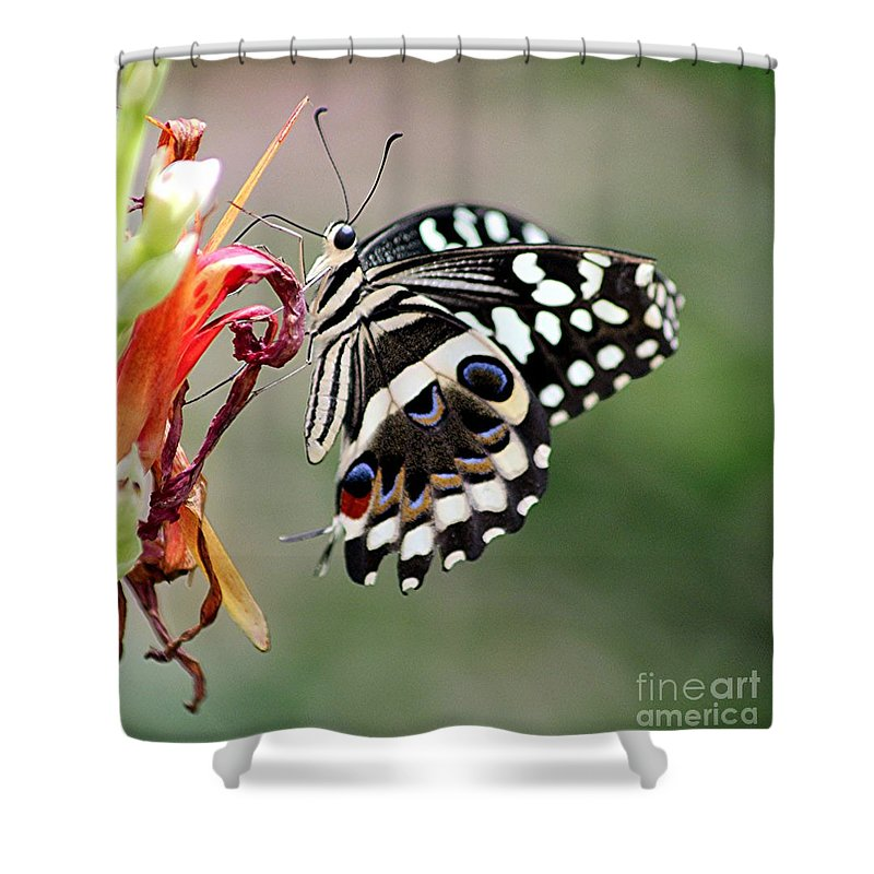 Butterfly Shower Curtain featuring the photograph Butterly by Diane Greco-Lesser