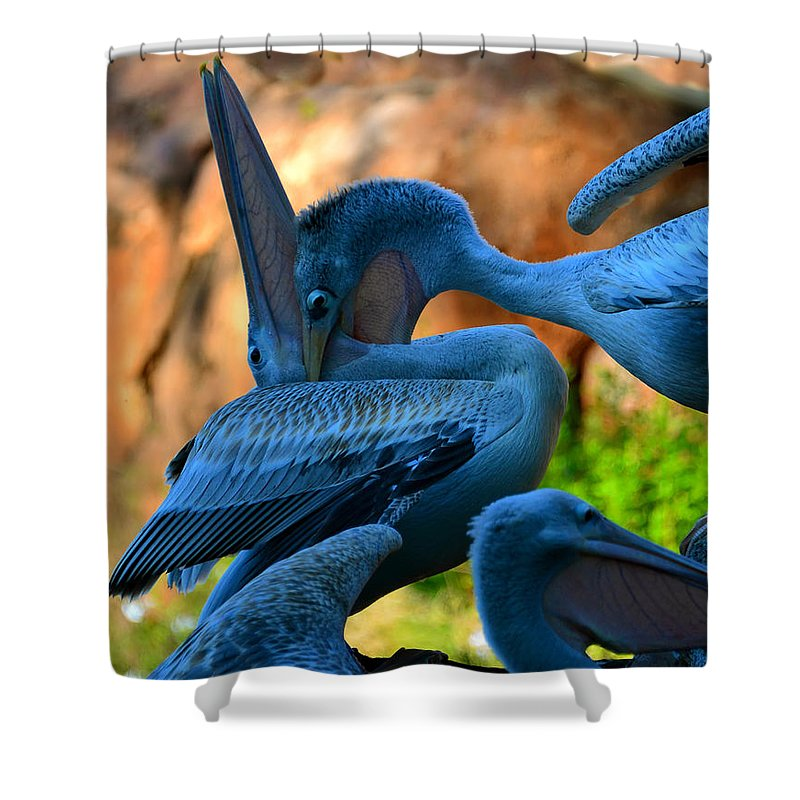 Great White Pelicans Shower Curtain featuring the photograph By The Throat by David Lee Thompson