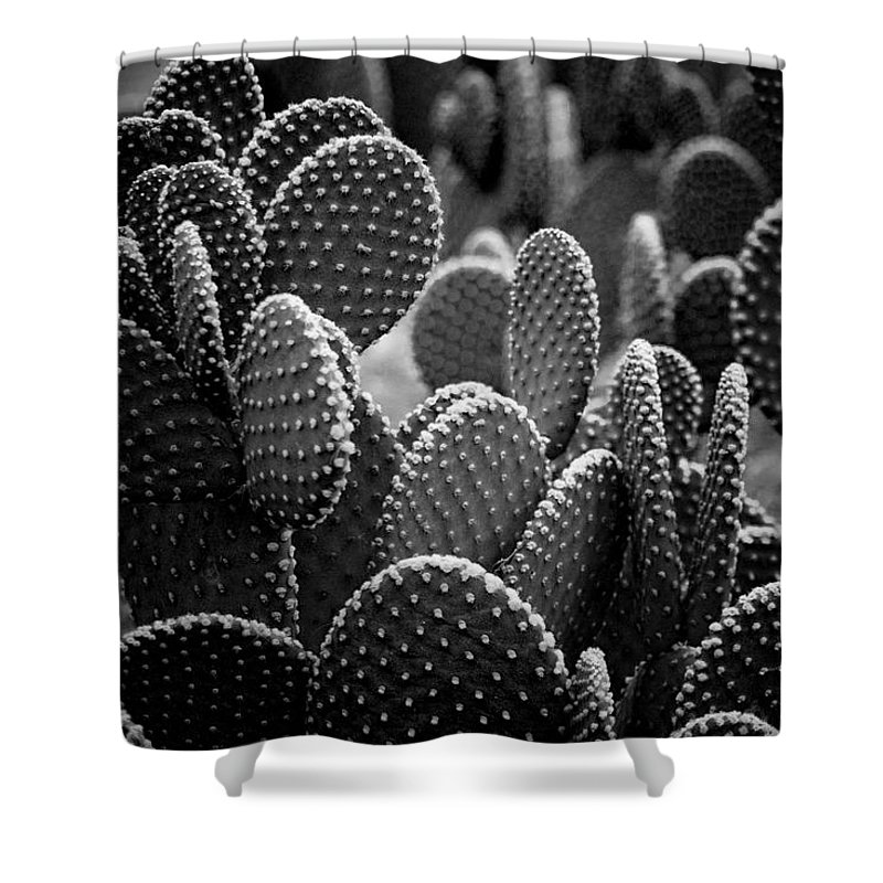 Botanicals Shower Curtain featuring the photograph Cactus 5252 by Timothy Bischoff