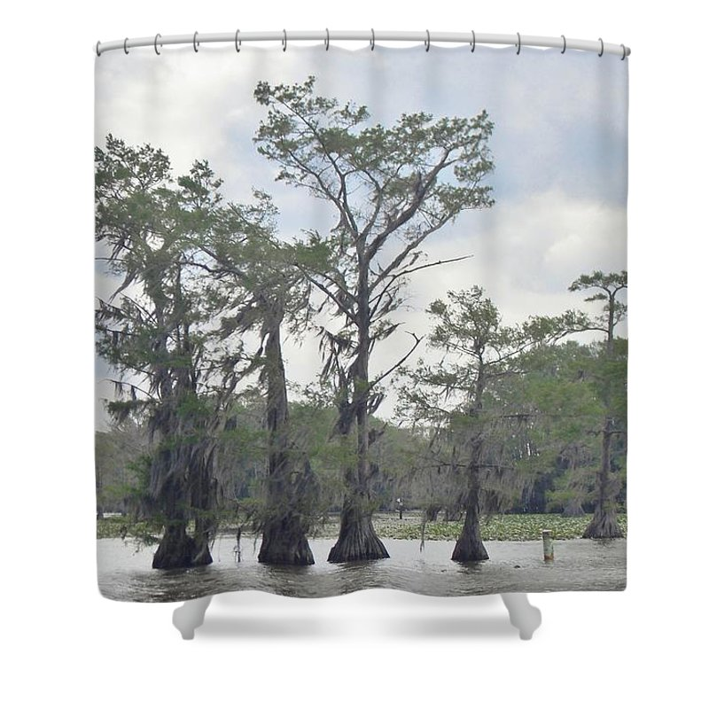 Caddo Lake Shower Curtain featuring the photograph Caddo Lake Cypress Trees by Donna Wilson