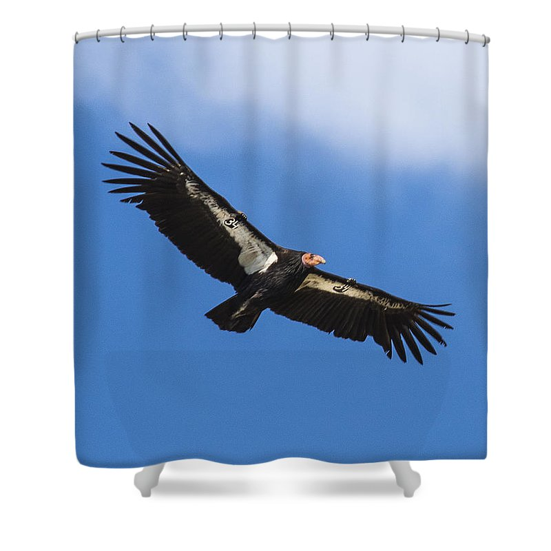 Big Sur Shower Curtain featuring the photograph California Condor by Doug Holck