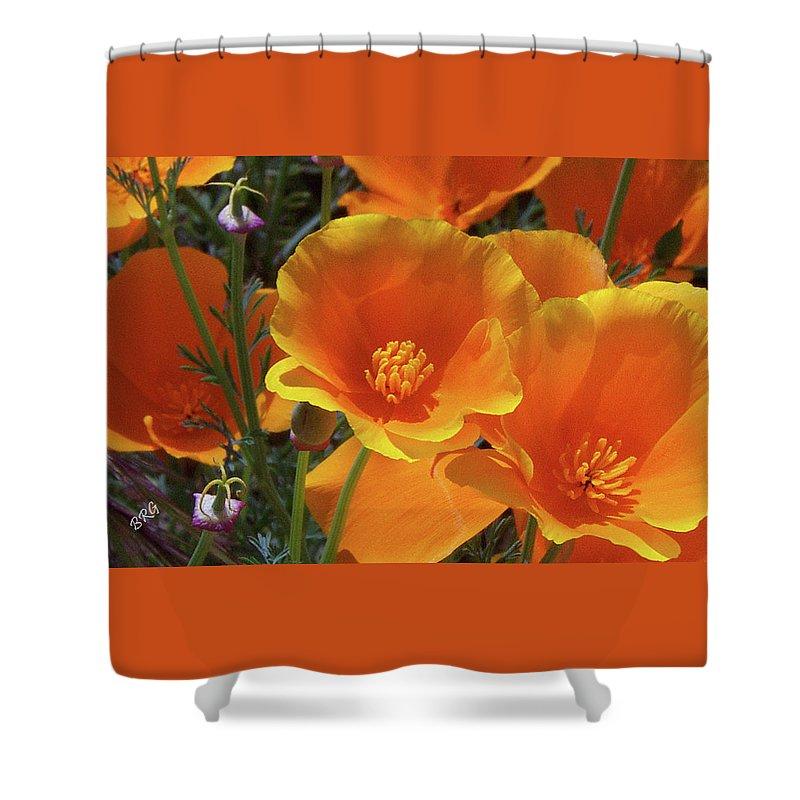 Eschscholzia Californica Shower Curtain featuring the photograph California Poppies by Ben and Raisa Gertsberg