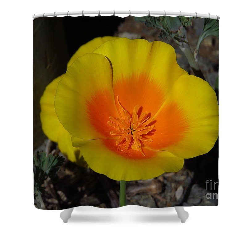 Poppy Shower Curtain featuring the photograph California Poppy by Craig Corwin