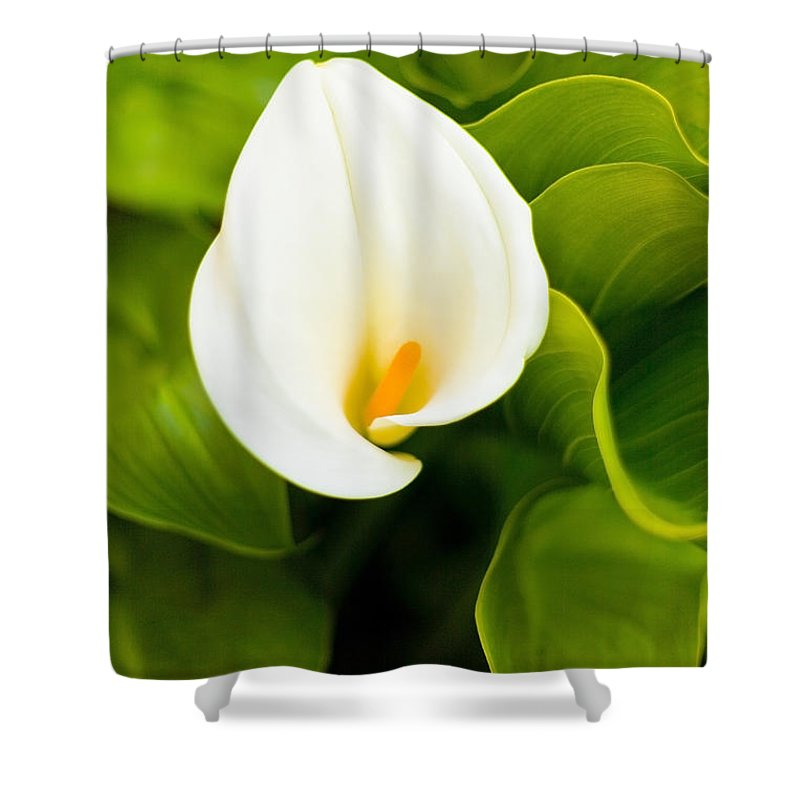 Calla Lily Shower Curtain featuring the photograph Calla Lily Plant by Richard J Thompson