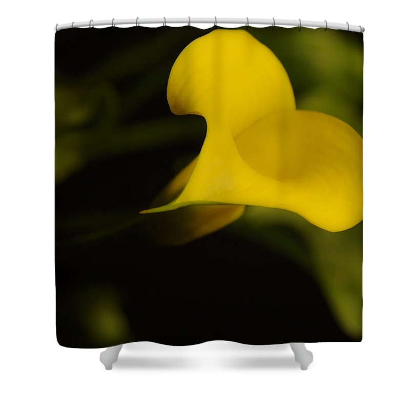 Calla Lilly Shower Curtain featuring the photograph Calla Lily Yellow IIi by Ron White
