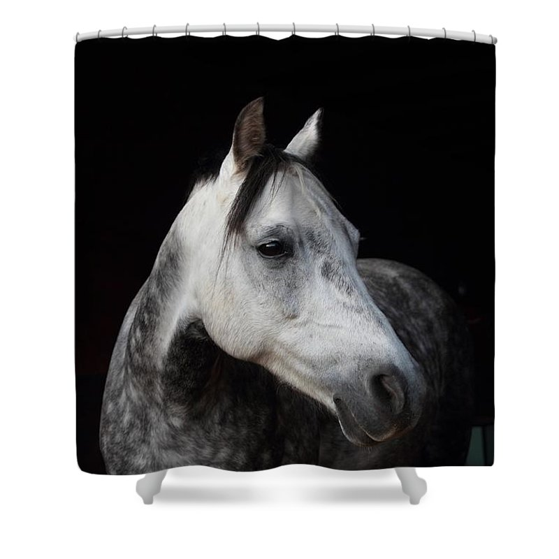 Horse Shower Curtain featuring the photograph Calypso by Jim Koniar