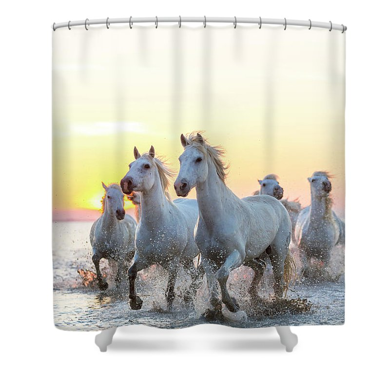 Animal Themes Shower Curtain featuring the photograph Camargue White Horses Running In Water by Peter Adams