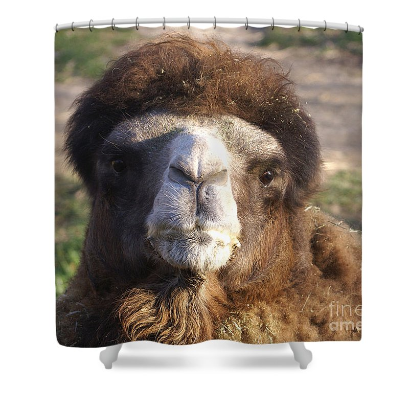 Camel Shower Curtain featuring the photograph Camel Face by Robert Edgar