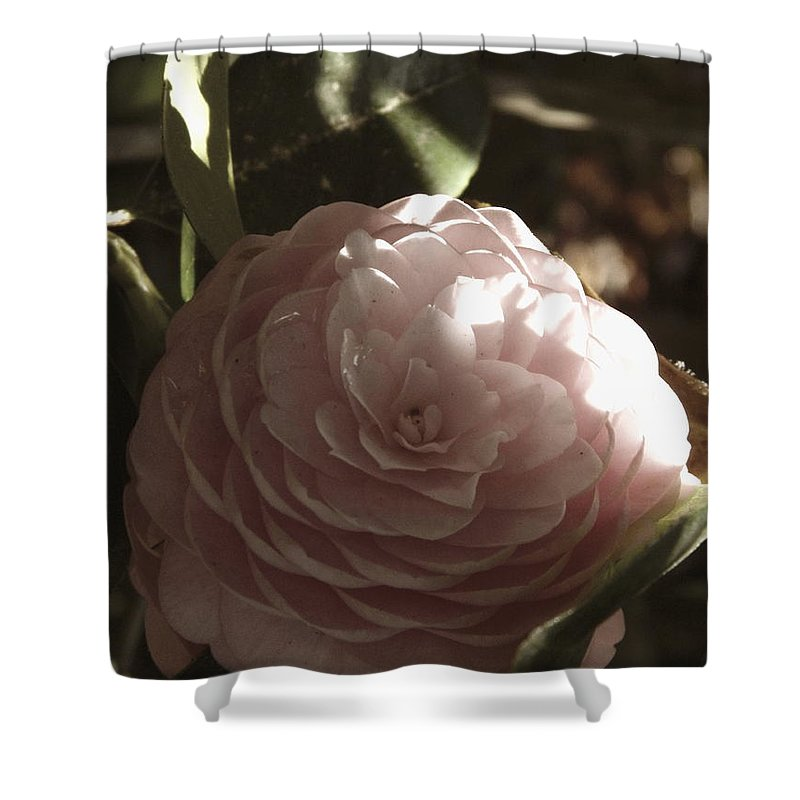 Camellia Shower Curtain featuring the photograph Camellia 2 by Andrea Anderegg