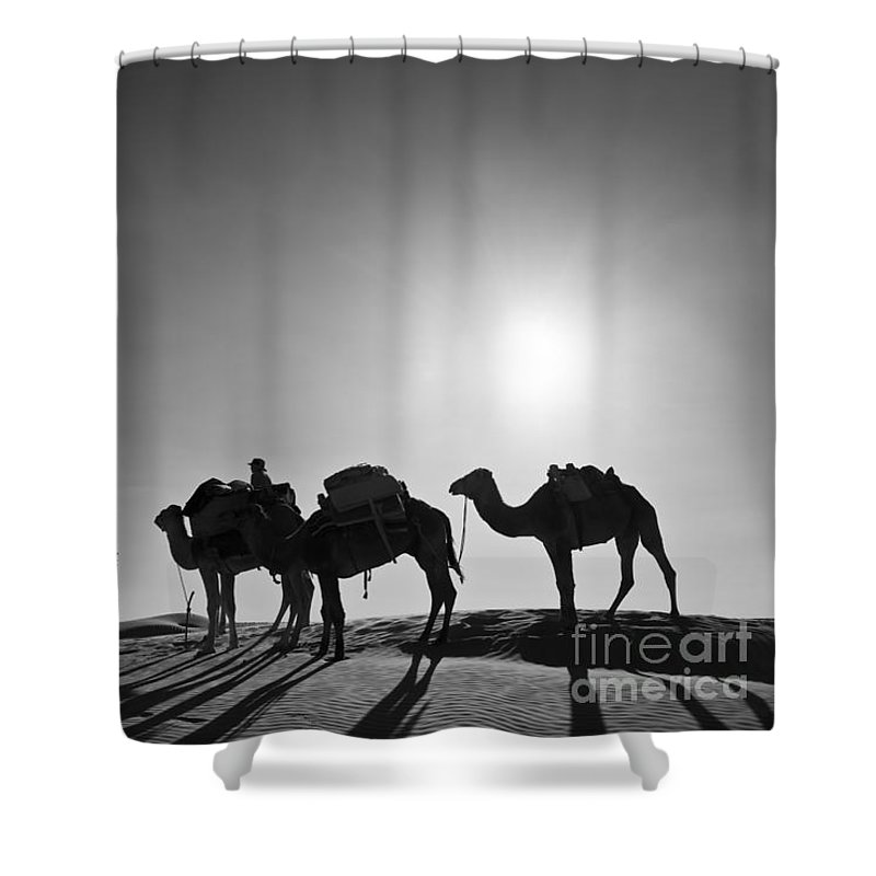 Camel Shower Curtain Featuring The Photograph Camels By Delphimages Photo Creations