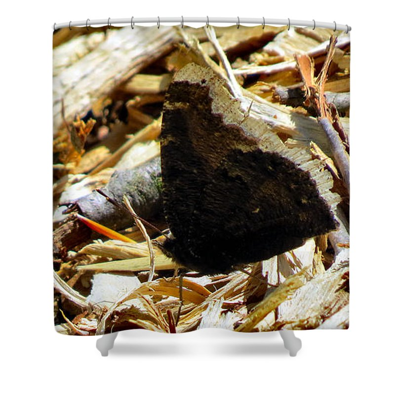 Moth Shower Curtain featuring the photograph Camouflage by Art Dingo