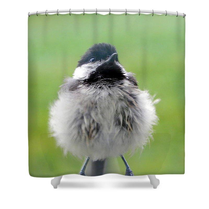 Close Encounters Of The Bird Kind Shower Curtain featuring the photograph Close Encounters Of The Bird Kind by Karen Cook
