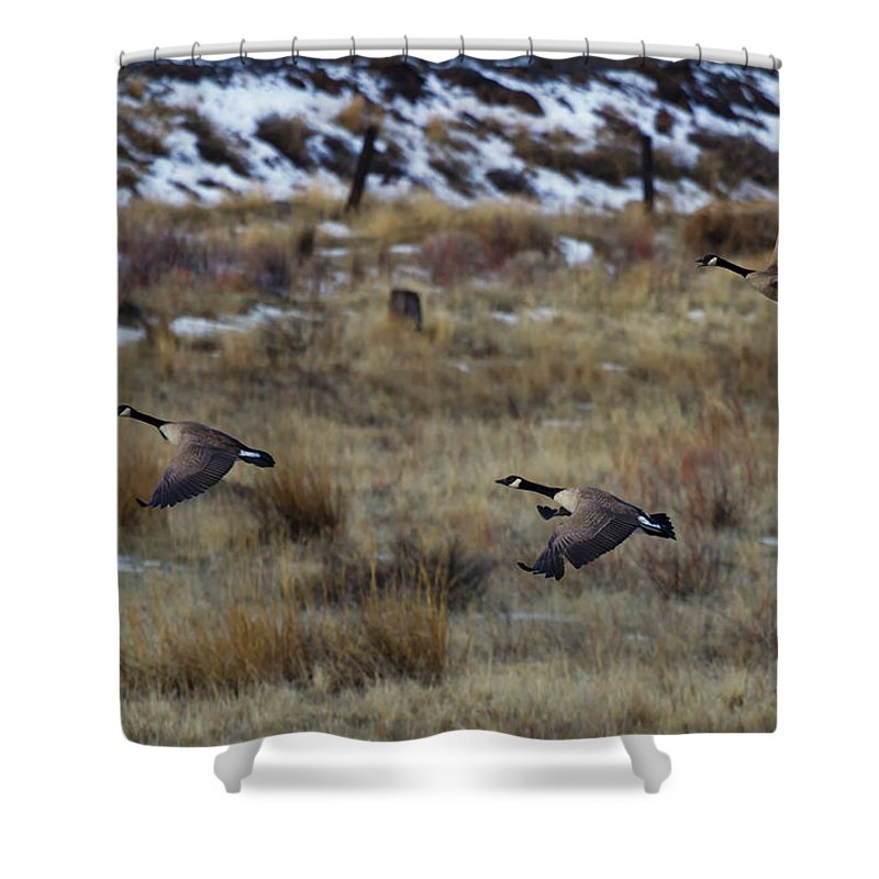 Geese Shower Curtain featuring the photograph Canadian Geese In Flight by Mike Dawson
