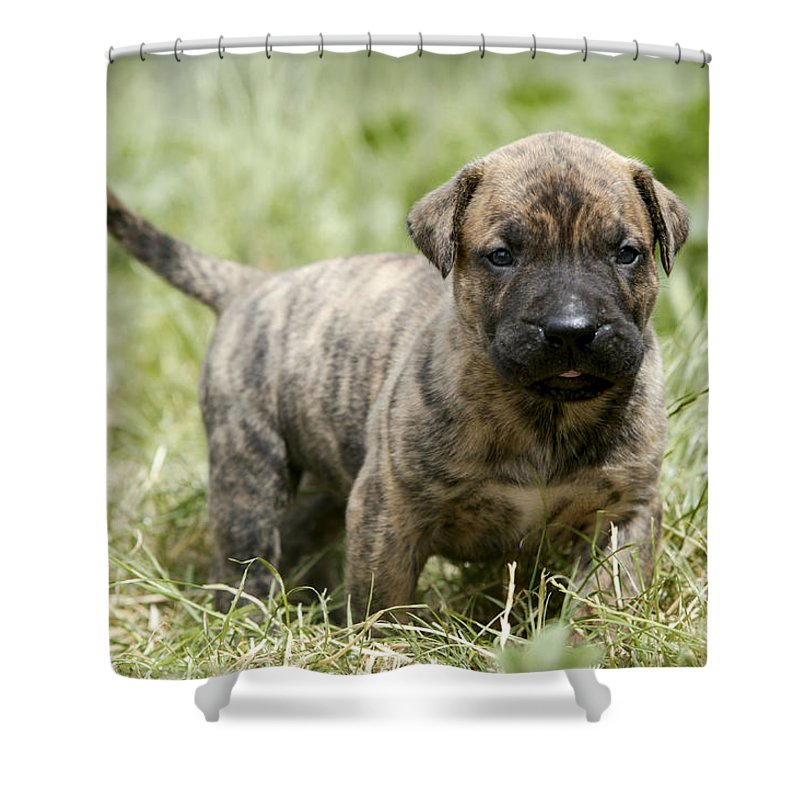 Canary Dog Shower Curtain Featuring The Photograph Puppy By Jean Michel Labat