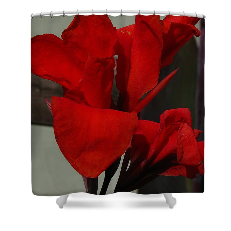 Patzer Shower Curtain featuring the photograph Canna by Greg Patzer