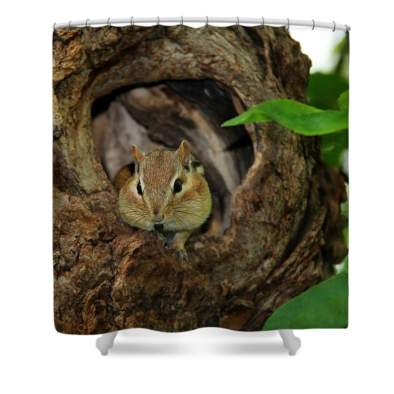 Animal Shower Curtain featuring the photograph Cant Talk With My Mouth Full by Davandra Cribbie