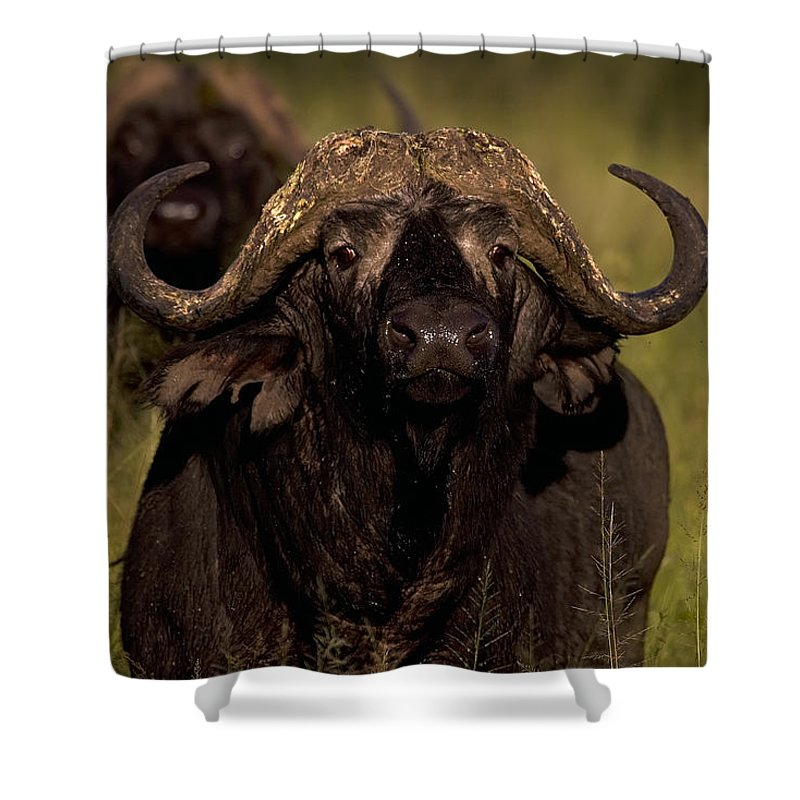Syncercus Caffer Shower Curtain featuring the photograph Cape Buffalo  #6883 by J L Woody Wooden