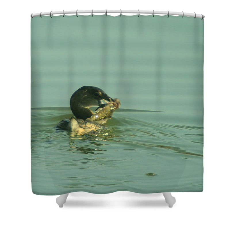 Birds Shower Curtain featuring the photograph Captured by Jeff Swan